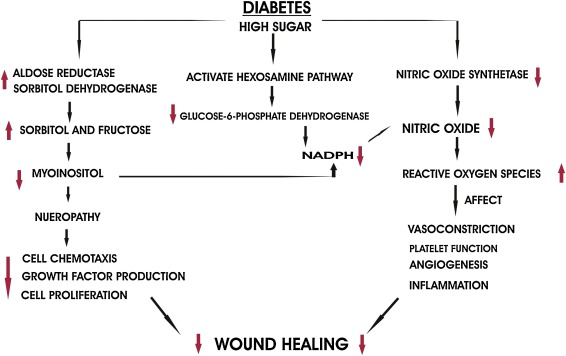 Mechanistic insight into diabetic wounds: Pathogenesis