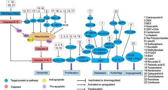 Natural Products For Treating Colorectal Cancer A Mechanistic Review Sciencedirect