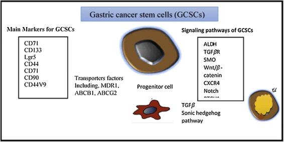 gastric cancer marker