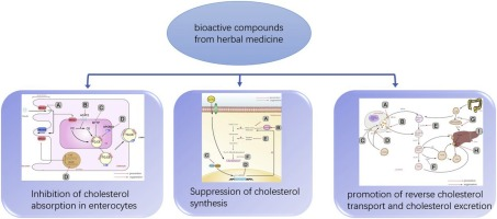 Bioactive compounds from herbal medicines to manage