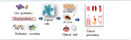 Probiotics For Cancer Alternative Prevention And Treatment Sciencedirect