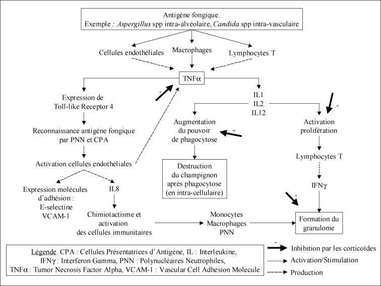 Risque infectieux fongique au cours des maladies systémiques ...