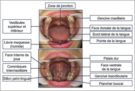 cancer al cavitatii bucale drogurile oamenilor împotriva protozoarelor