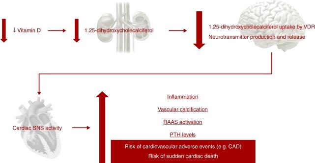 kdoqi ckd diabetes fisiopatología