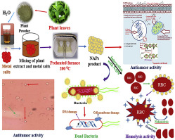 Enhanced antimicrobial, antioxidant, in vivo antitumor and