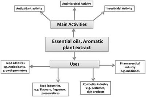 A comprehensive review of the antibacterial, antifungal and