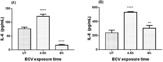 An investigation into E-cigarette cytotoxicity in-vitro