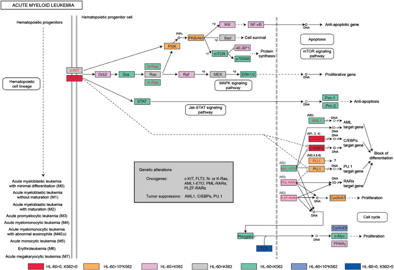 Dynamic transcriptomes of human myeloid leukemia cells - ScienceDirect