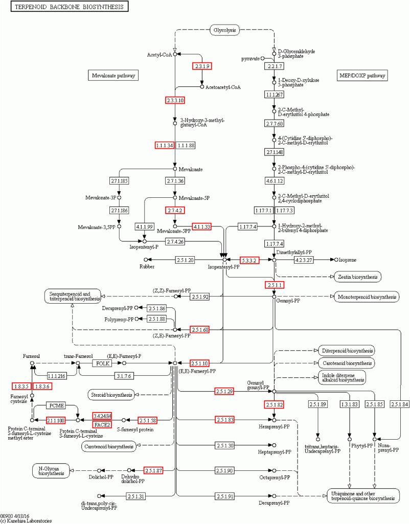 Whole genome sequence of Auricularia heimuer (Basidiomycota, Fungi