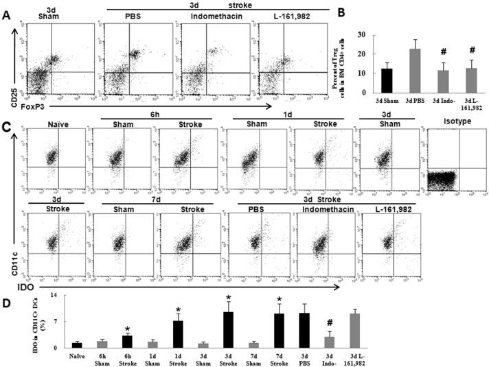 Cerebral ischemia increases bone marrow CD4+CD25+FoxP3+ regulatory T