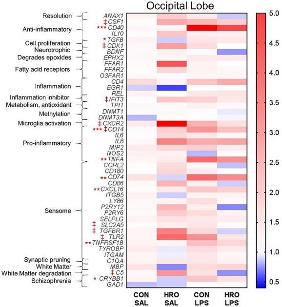 Herring roe oil supplementation alters microglial cell gene