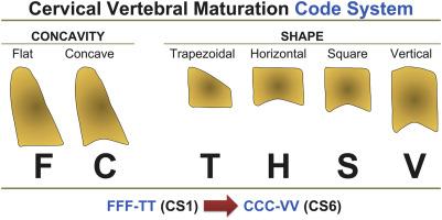 Cervical Vertebral Maturation An Objective And Transparent