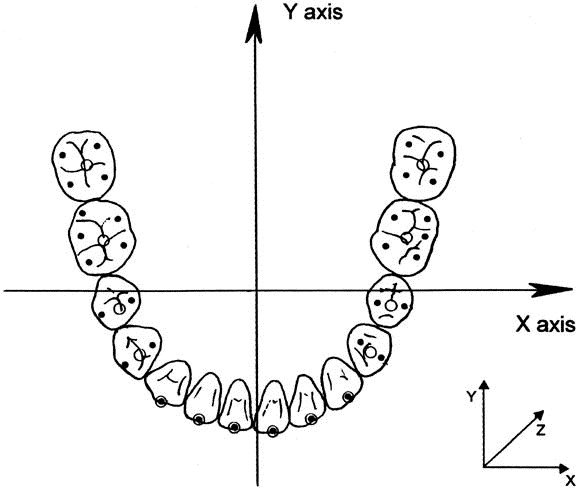 Three Dimensional Dental Arch Curvature In Human Adolescents And