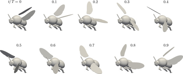 The dynamics of passive feathering rotation in hovering flight of