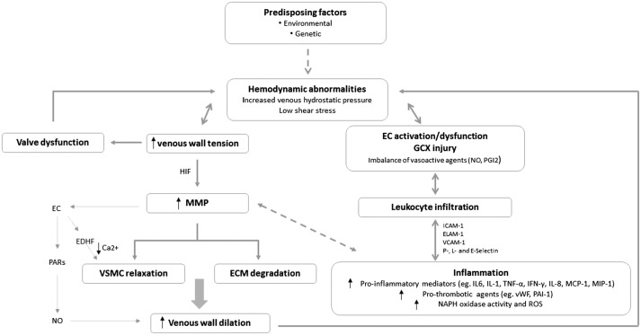 The Role Of Endothelial Dysfunction And Inflammation In Chronic Ezgo Wiring Diagram 1995 Mack Truck Wiring Diagram On Evidence In Favor Of A Primary Role Of Venous Wall Changes In Cvd Pathogenesis