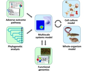 Applying evolutionary genetics to developmental toxicology