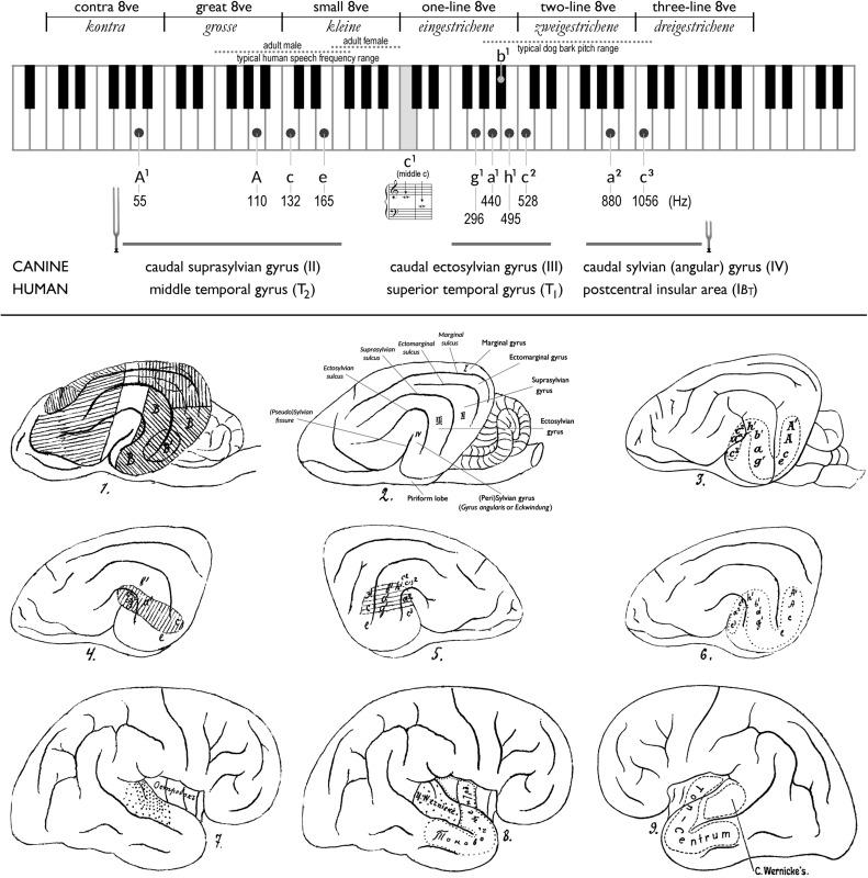The musical centers of the brain: Vladimir E. Larionov (1857–1929 ...