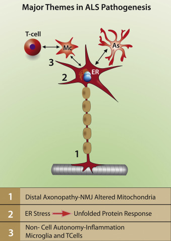 The Role Of Electromagnetic Fields In Neurological Disorders