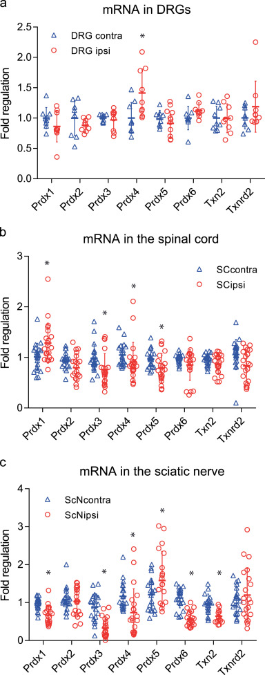Redoxins in peripheral neurons after sciatic nerve injury