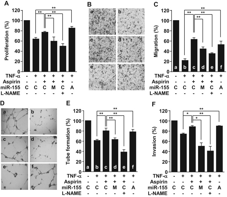 Aspirin prevents TNF-α-induced endothelial cell dysfunction