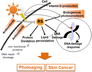 Sunlight damage to cellular DNA: Focus on oxidatively generated ...