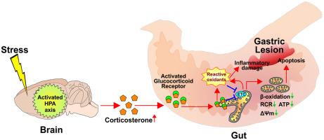 Wie du in 10 Schritten deine Mitochondrien stärkst 10