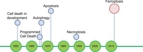The Development Of The Concept Of Ferroptosis Sciencedirect