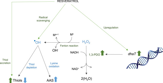 Resveratrol protects Lactobacillus reuteri against H2O2- induced