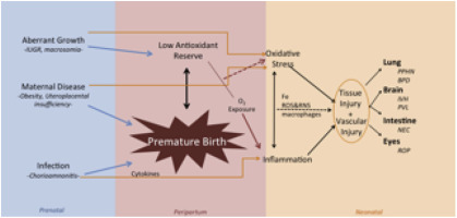 Oxygen radical disease in the newborn, revisited: Oxidative stress