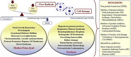 Biomarkers of oxidative stress in the fetus and in the