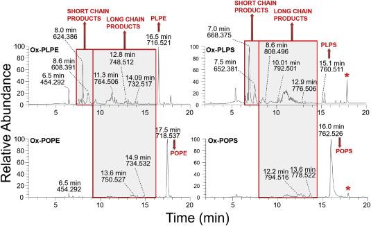 Analysis of oxidised and glycated aminophospholipids