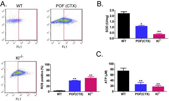 miR-15b induces premature ovarian failure in mice via