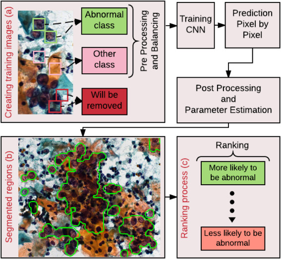 Deep learning for cell image segmentation and ranking