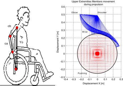 Biomechanical Model For The Determination Of Forces On Upper Extremity Members During Standard Wheelchair Propulsion Sciencedirect