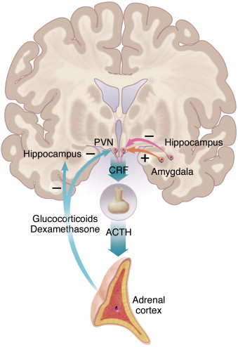 Neurobiology of depression sciencedirect download high res image 337kb ccuart Image collections