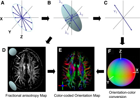 Principles of Diffusion Tensor Imaging and Its Applications