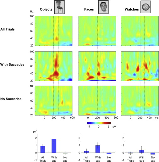 Transient Induced Gamma-Band Response in EEG as a