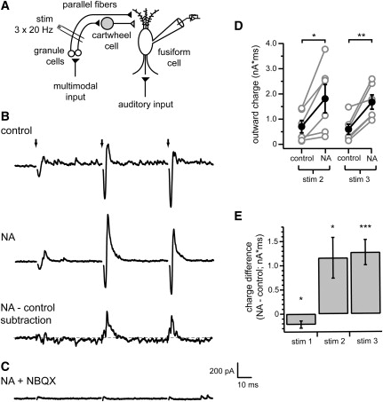 Spontaneous Spiking And Synaptic Depression Underlie Noradrenergic