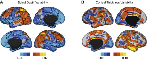 Individual Variability in Functional Connectivity