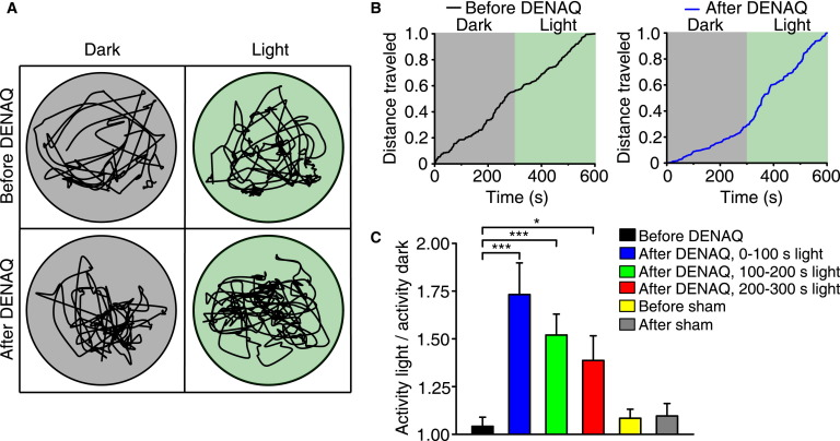 Restoring Visual Function to Blind Mice with a Photoswitch that