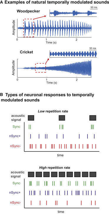 Neuronal Mechanisms And Transformations Encoding Time Varying