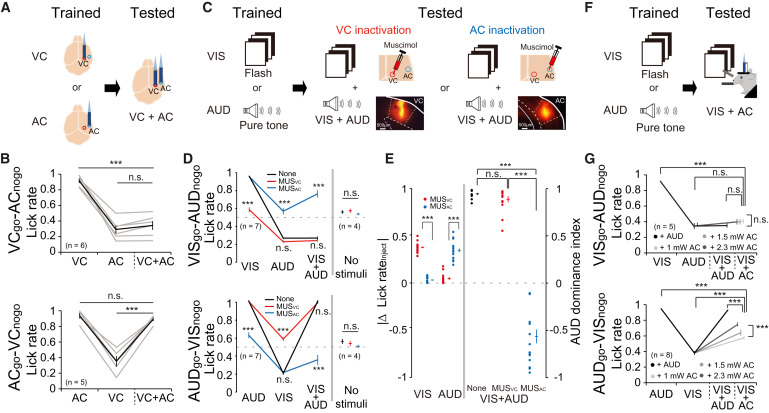 A Neural Circuit for Auditory Dominance over Visual