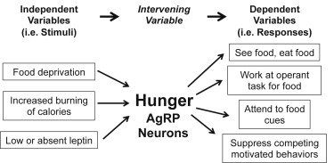 Toward a wiring diagram understanding of appetite control download high res image 194kb asfbconference2016 Choice Image