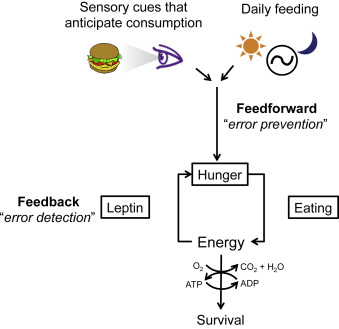 Toward a wiring diagram understanding of appetite control download high res image 204kb asfbconference2016 Choice Image