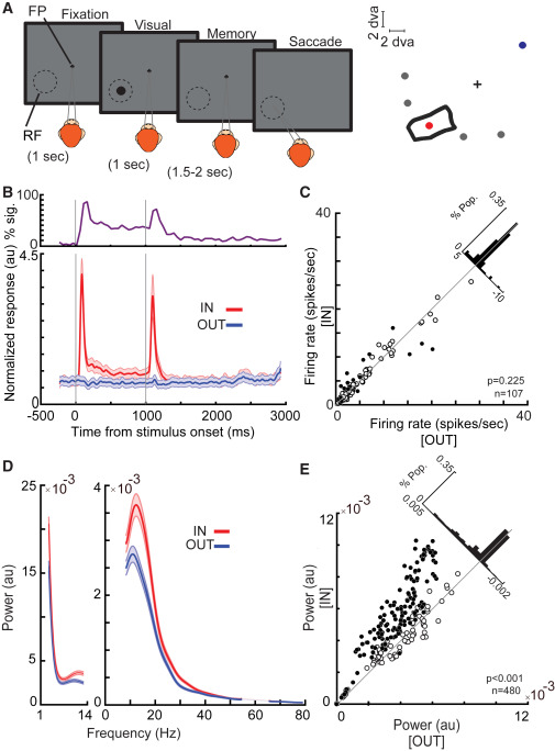Working Memory Enhances Cortical Representations via Spatially