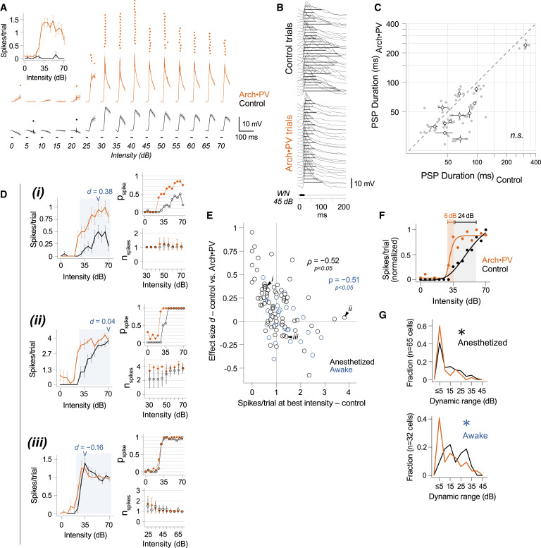 Rapid Rebalancing of Excitation and Inhibition by Cortical