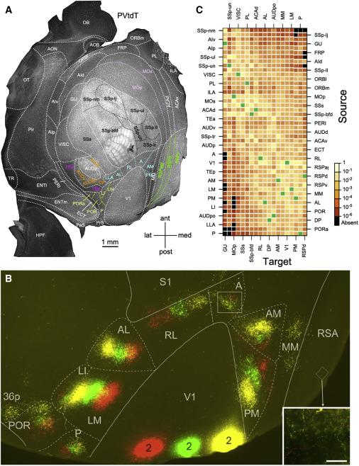 Parcellating Cerebral Cortex: How Invasive Animal Studies Inform