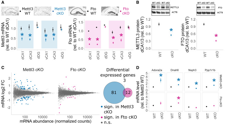 The Role of m6A/m-RNA Methylation in Stress Response