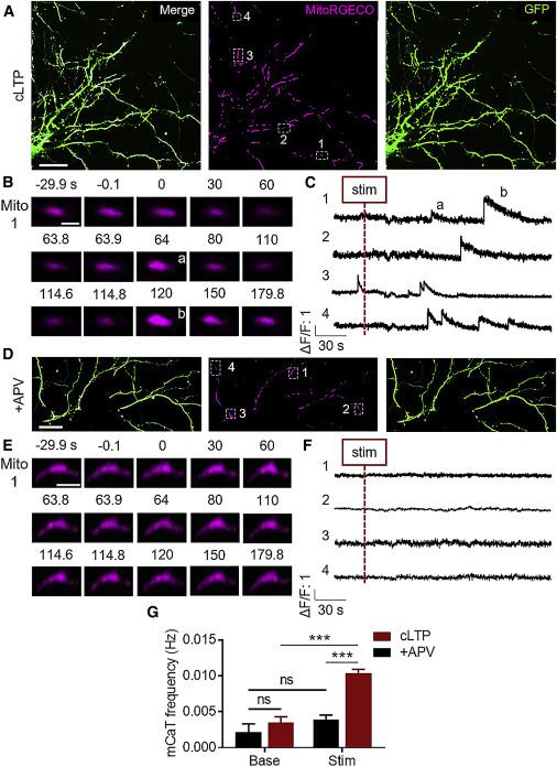 Long-Term Potentiation Requires a Rapid Burst of Dendritic