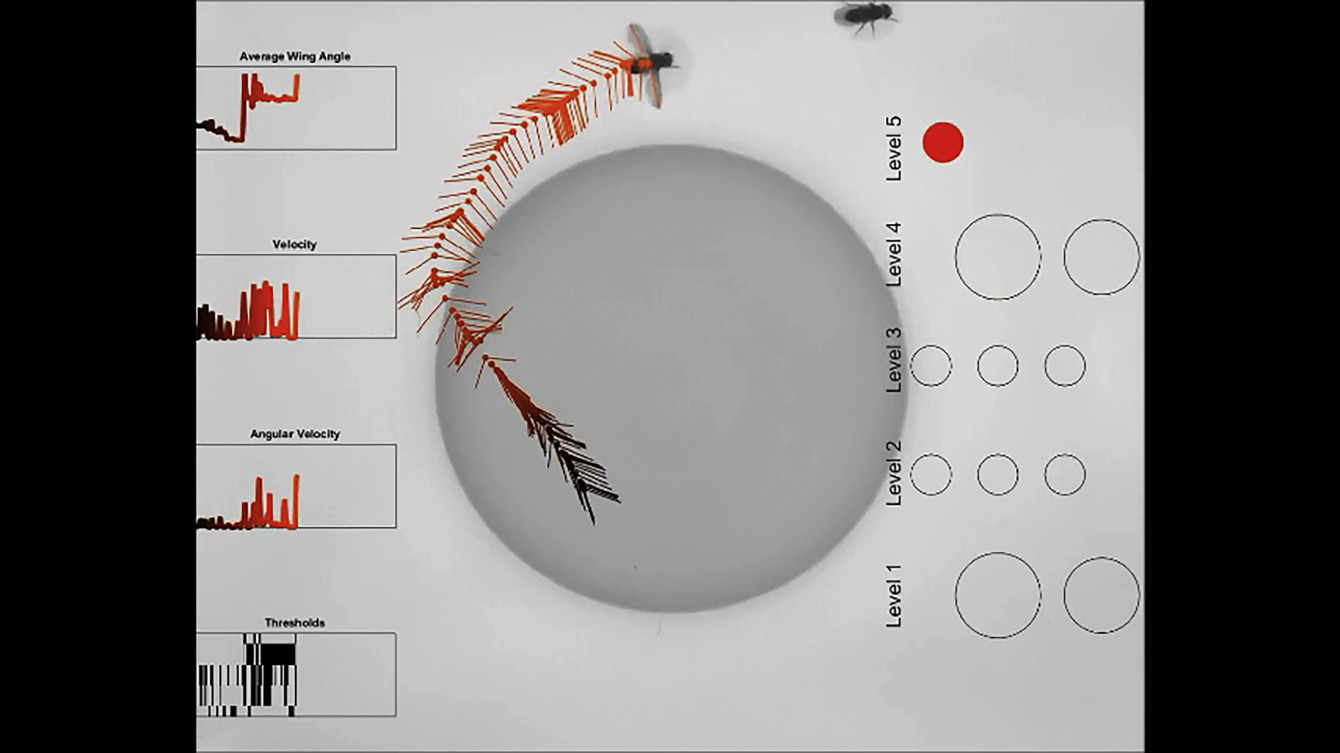 A Brain Module For Scalable Control Of Complex Multi Motor Threat Chicken Wing Diagram Comparative Anatomy Lab 2 Displays Sciencedirect